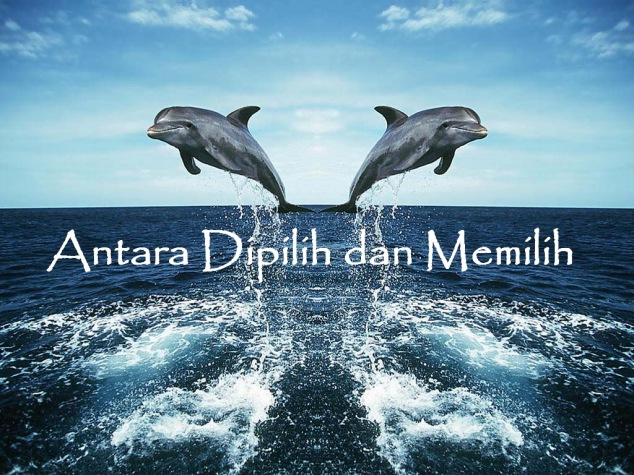 jumping_dolphins