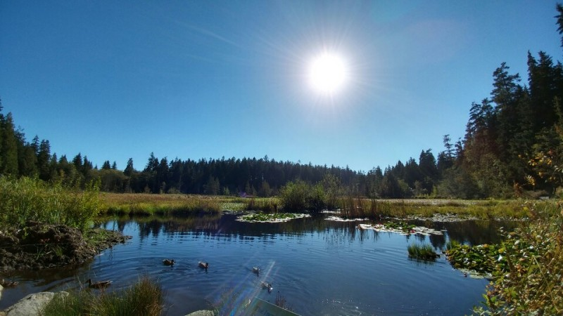 Lost Lagoon, an artificial body of water located at the near entrance to Stanley Park.