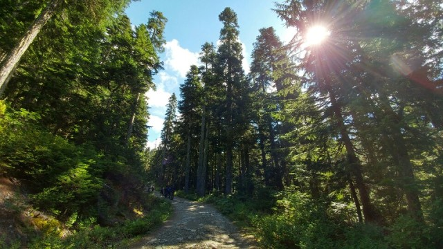 Beautiful trees surrounding our hiking trails to Elfin Lake.